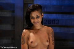 Skin Diamond - Skin Diamond Day Two Slave Ransom (Thumb 03)