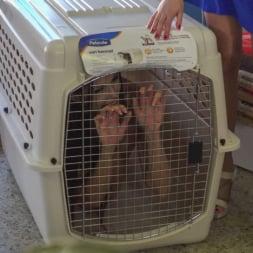 Alexa Tomas in 'Kink' Slutty Pet Begs for a Bone!!! - Part 2 (Thumbnail 2)