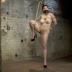 Annika in 'Kink' Returns to HogTied (Thumbnail 4)