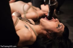 Asphyxia Noir - October Intake Three Doms Test Three Trainees (Thumb 18)