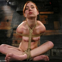 Calico in 'Kink' Calico (Thumbnail 9)