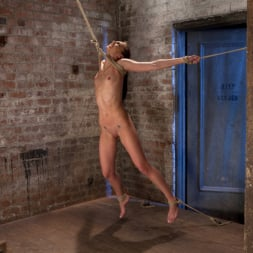 Tiffany Tyler in 'Kink' It's her first hardcore Bondage shoot. She cums like a whore while gagged and suspended! Category 5 (Thumbnail 7)