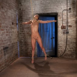 Tiffany Tyler in 'Kink' It's her first hardcore Bondage shoot. She cums like a whore while gagged and suspended! Category 5 (Thumbnail 8)