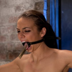 Tiffany Tyler in 'Kink' It's her first hardcore Bondage shoot. She cums like a whore while gagged and suspended! Category 5 (Thumbnail 12)