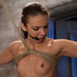Tiffany Tyler in 'Kink' It's her first hardcore Bondage shoot. She cums like a whore while gagged and suspended! Category 5 (Thumbnail 15)